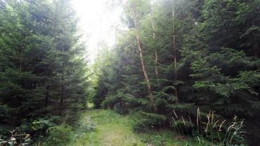 Wandern am Hohnekamm Harz (25)