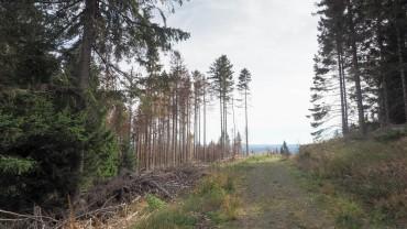Wandern am Hohnekamm Harz (28)