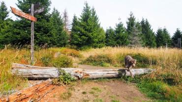 Wandern am Hohnekamm Harz (8)