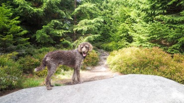 Wandern am Hohnekamm Harz (9)