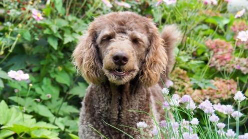 Wandern mit Hund (5)