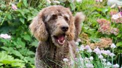 Wandern mit Hund (6)