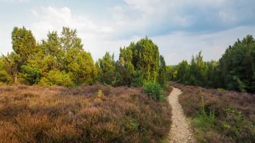 Wietzer Berg Lueneburger Heide (11)
