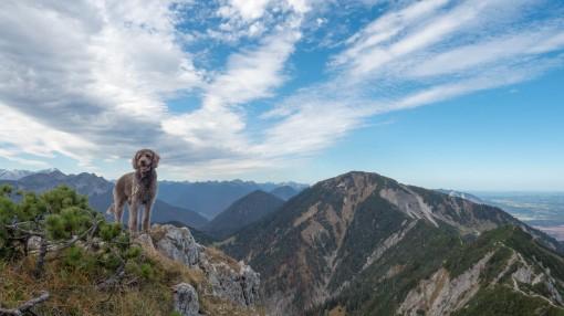 Herzogstand Heimgarten mit Hund (20)
