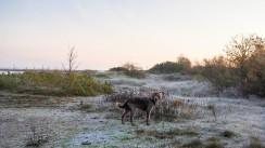 Laboe Dünen mit Hund (7)