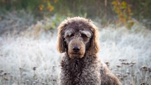 Ostsee mit Hund im Winter (4)