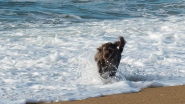 Bretagne mit Hund (6)