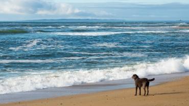 Strand bei Étel mit Hund