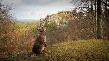 ... Burg Regenstein