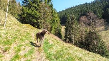 Am Badstubenweg Wildemann