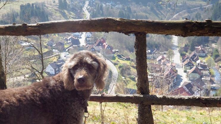 Wildemann mit Hund