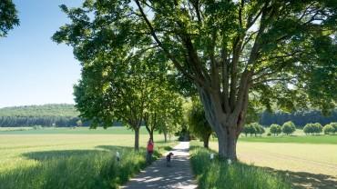 Wasserbaum Weg im Ith
