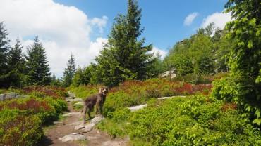 Hohnekamm mit Hund (1)
