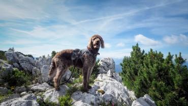 Harzer Wanderkaiser Bobby in den Alpen
