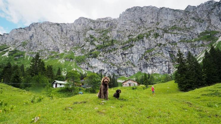 Tutzinger Hütte mit Hund (7)
