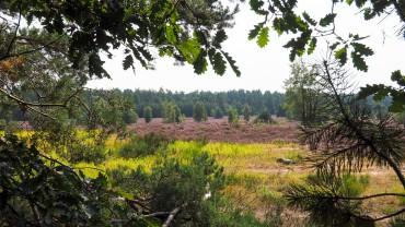 Behringer Heide
