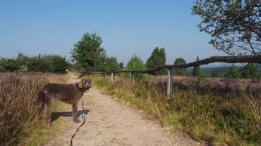 Wilseder Berg mit Hund (2)