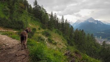 Karwendel mit Hund