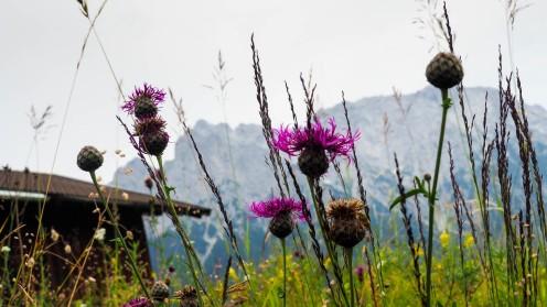 Karwendelblick von Mittenwald