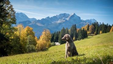Hallo Zugspitze!