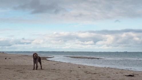 Ostsee mit Hund (2)