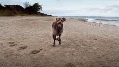 Ostsee mit Hund (3)